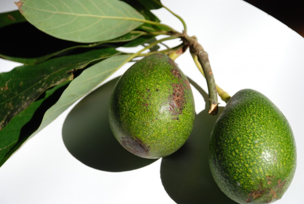 poleznyj-avokado