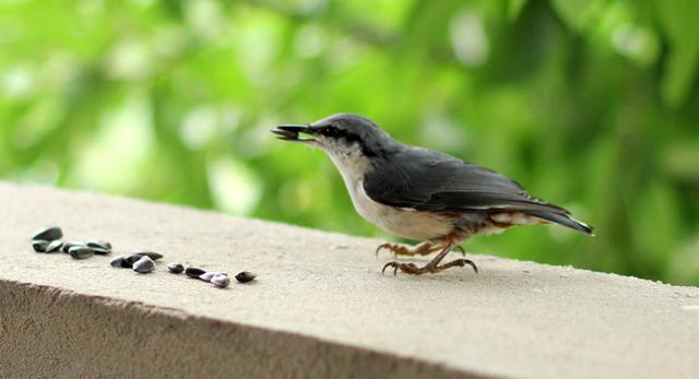 птицы любят семеС