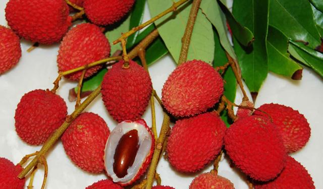 exotic+fruits+Litchi+chinensis_3