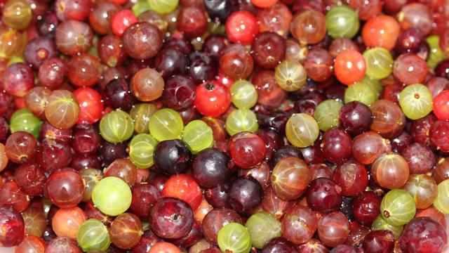 gooseberries-wild1