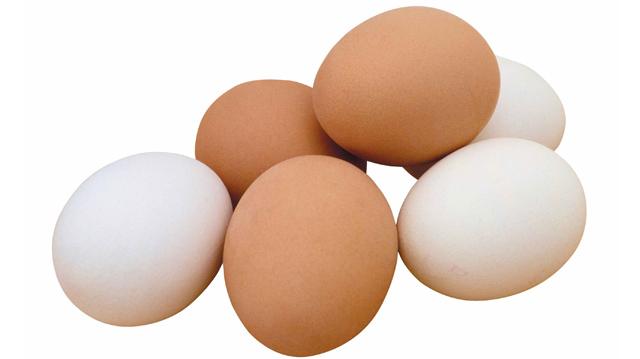 Белое яйцо секс