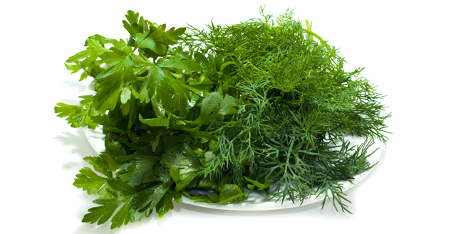 Parsley and fennel on a plate