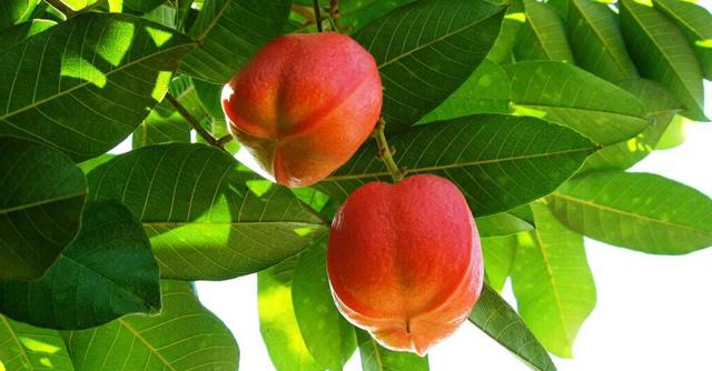 frukt-aki