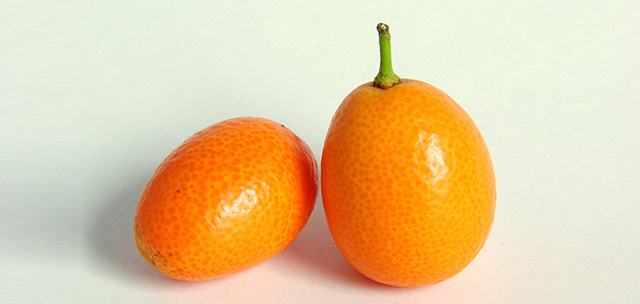 Kumquat-0245